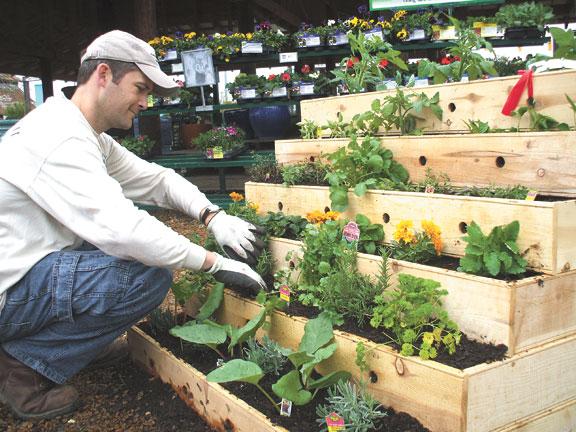 pequena horta no jardim : pequena horta no jardim:Urban Vegetable Garden Ideas
